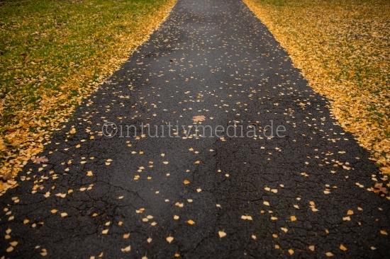 Weg mit Herbstlaub