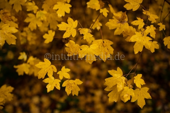 Herbstmotive Wald