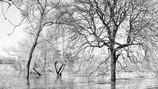 Bäume bei Hochwasser