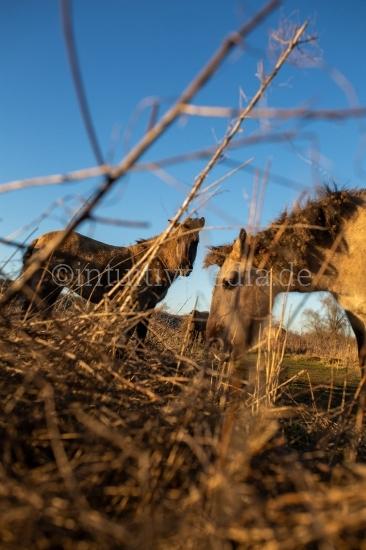 Pferde auf wilder wiese