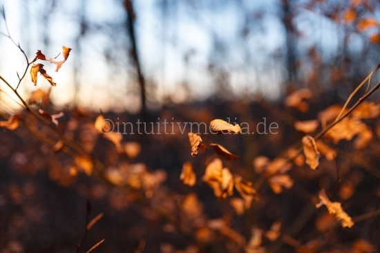 INTUITIVMEDIASTOCKFOTO052